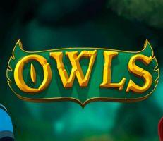 Owls Slot Logo